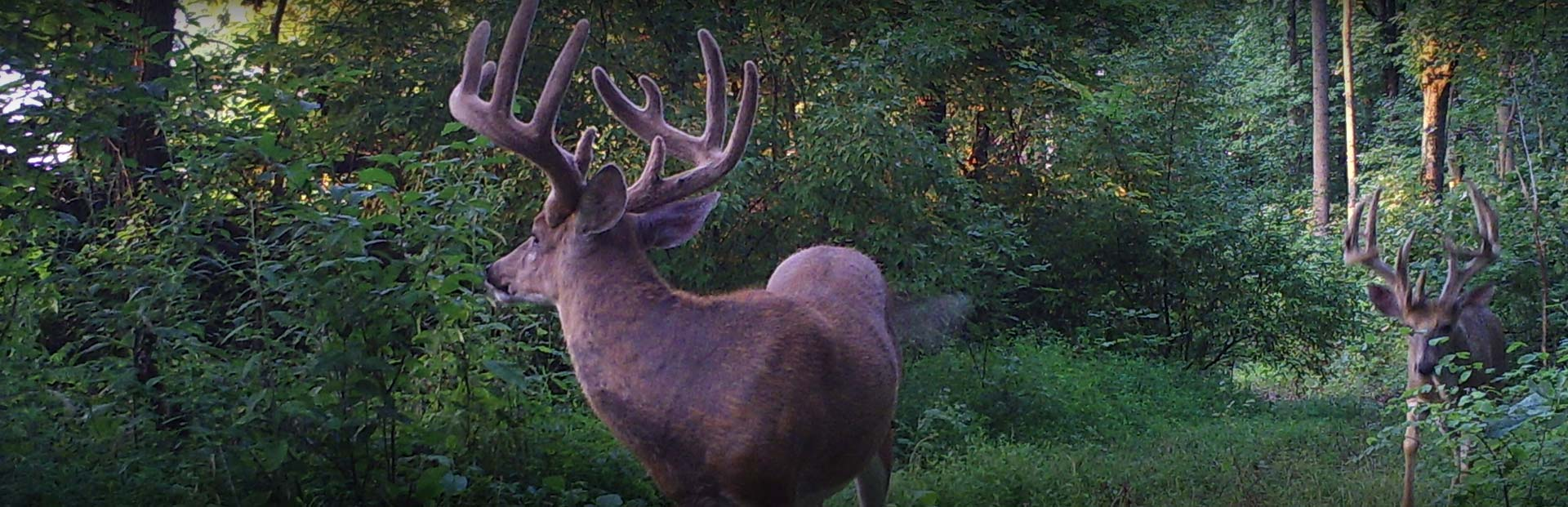 Illinois Ohio Valley Trophy Hunt - Blog